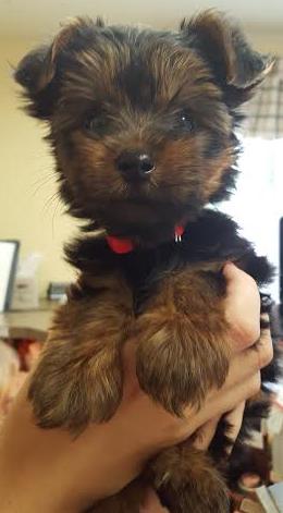 First Animal Hospital - Veterinarian - Bradenton, FL - Puppy Wellness