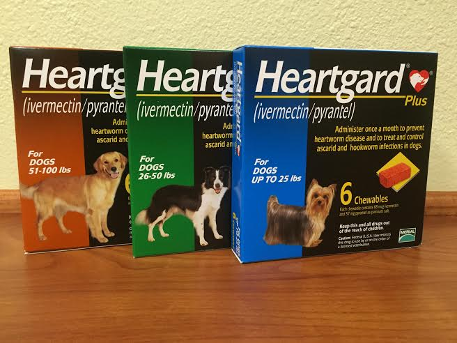 Heartworm treatment is available at Pet First Animal Hospital in Bradenton, FL